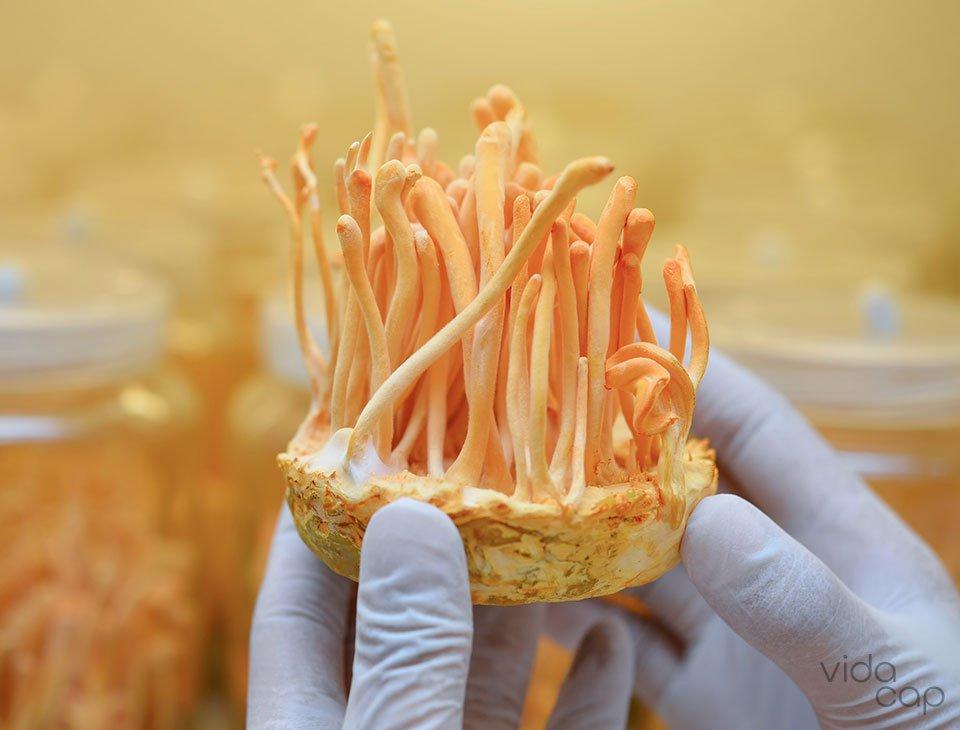 preview-cordyceps-mushroom-benefits